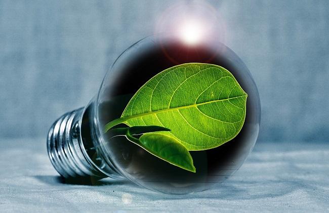 Gloeilamp met boomblad er in als energielabel